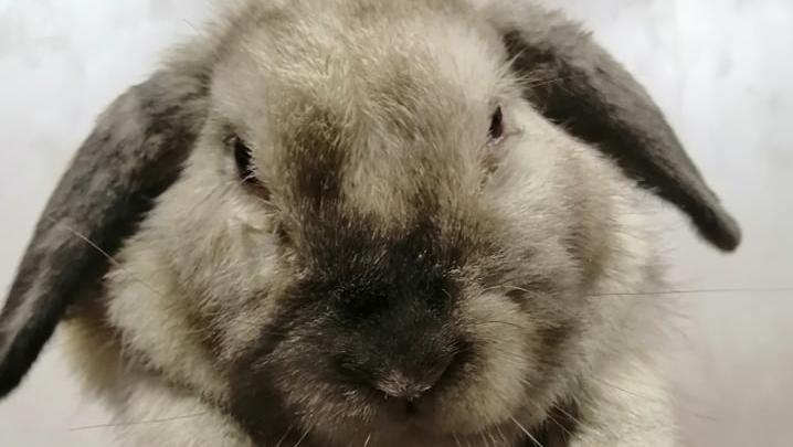 В Красноярске в мусоропровод выкинули крольчиху. Ее спасли и ищут ей семью