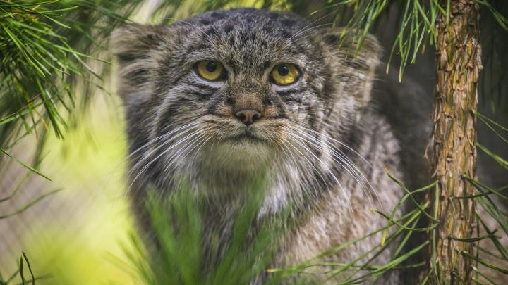 Видео: в зоопарке накормили самого сурового и популярного кота