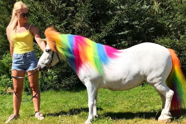 Гриву и хвост пони покрасили специальной безвредной краской