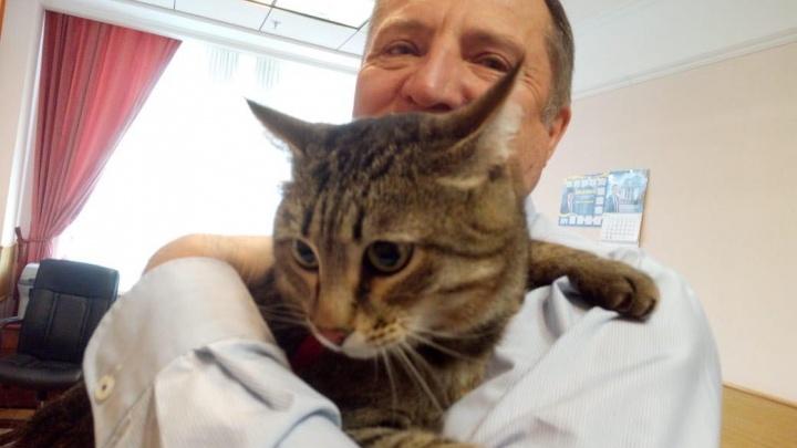 Депутат свердловского Заксобрания пришел на заседание с котом