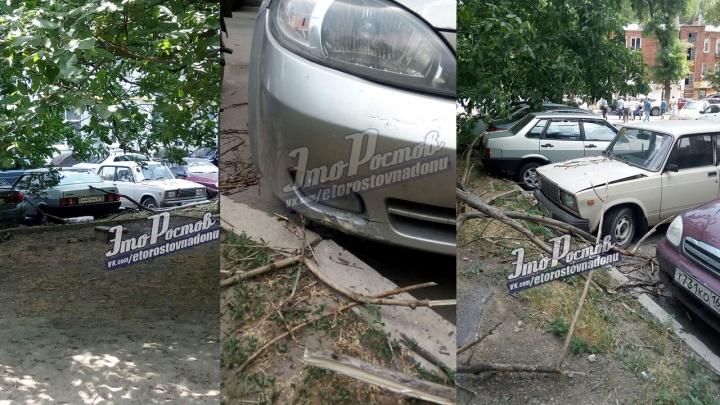 «Древопад» в Ростове: сухое дерево разбило сразу три машины