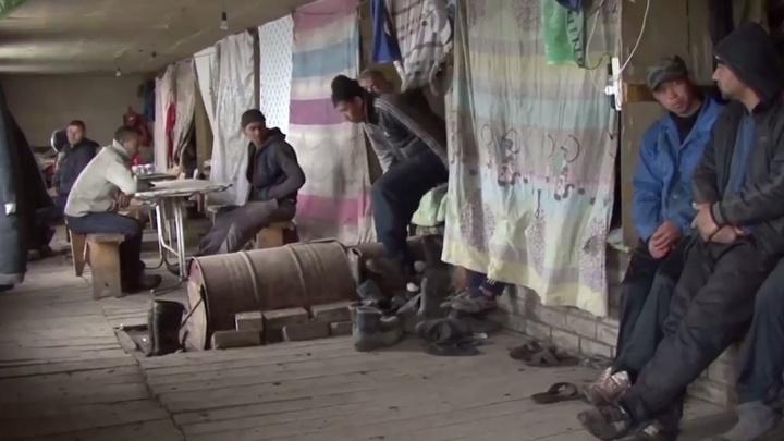 Спасают от вымирания? В Волгоградской области в два раза увеличился приток мигрантов