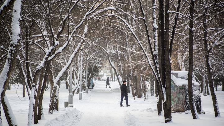 Конец осени порадует новосибирцев комфортной погодой