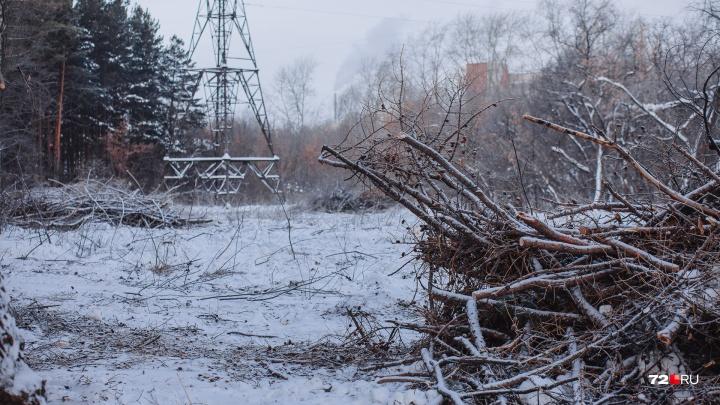 Подрядчики «Тюменьэнерго» объяснили, зачем они срубили десятки деревьев у Затюменского парка