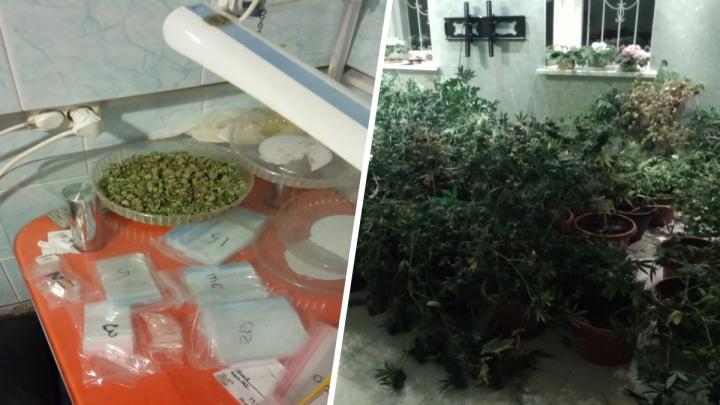 В Ярославле задержали мужчину, который пёк печенье с гашишем