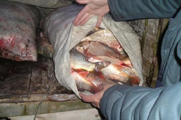 В лодке нашли 400 рыб