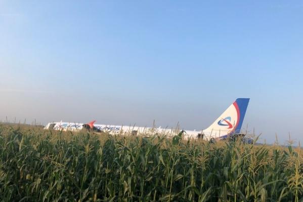 Самолет сел в кукурузном поле