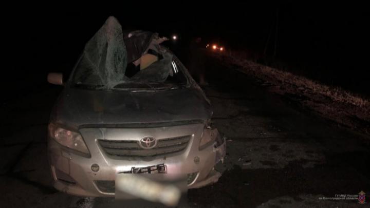 Иномарка сбила лося и врезалась в авто: пострадала волгоградка