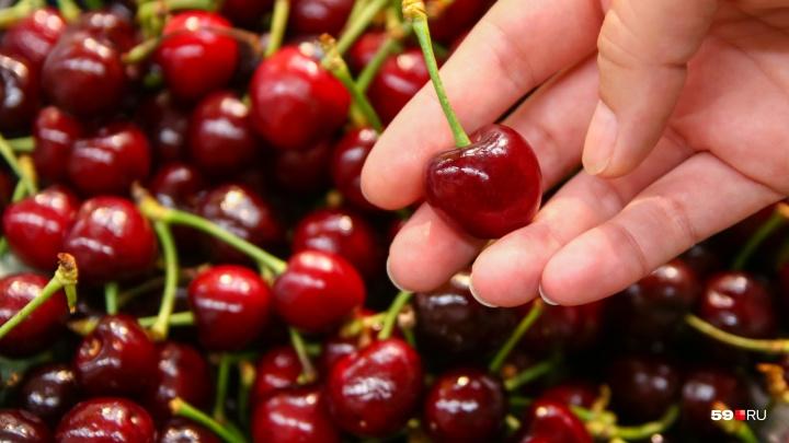 Где черешня вкуснее и дешевле? Пробуем летнюю ягоду в пермских супермаркетах