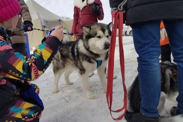 В фестивале участвовали собаки, кролики, птицы и другие животные