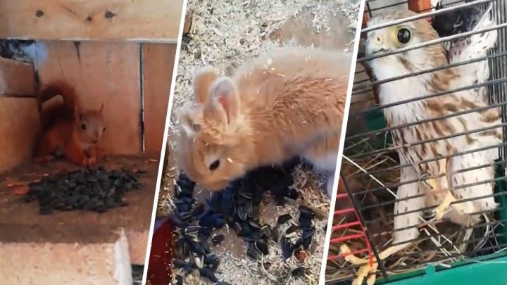 Крошечные белки, персиковый кролик и спасенный дербник: в ишимском зоопарке показали прибавление