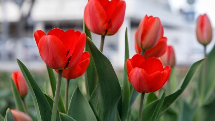 Весна вернется с новой силой: до 14 градусов тепла обещают волгоградцам на выходных
