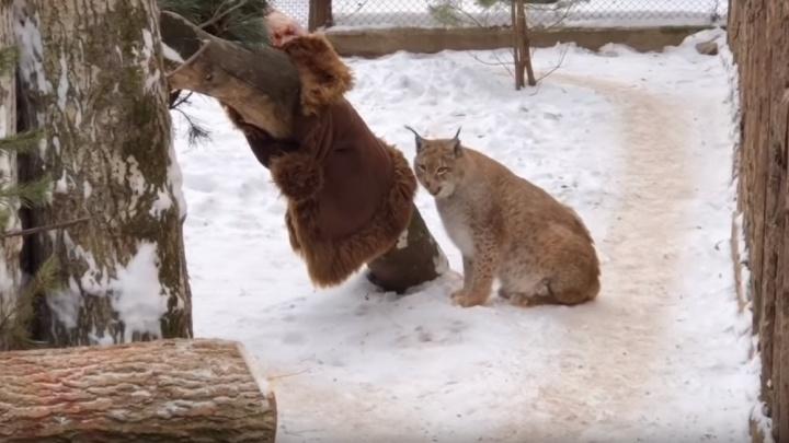 Пермяки завалили зоопарк шубами и шапками: из них сделали подарки животным. Видео