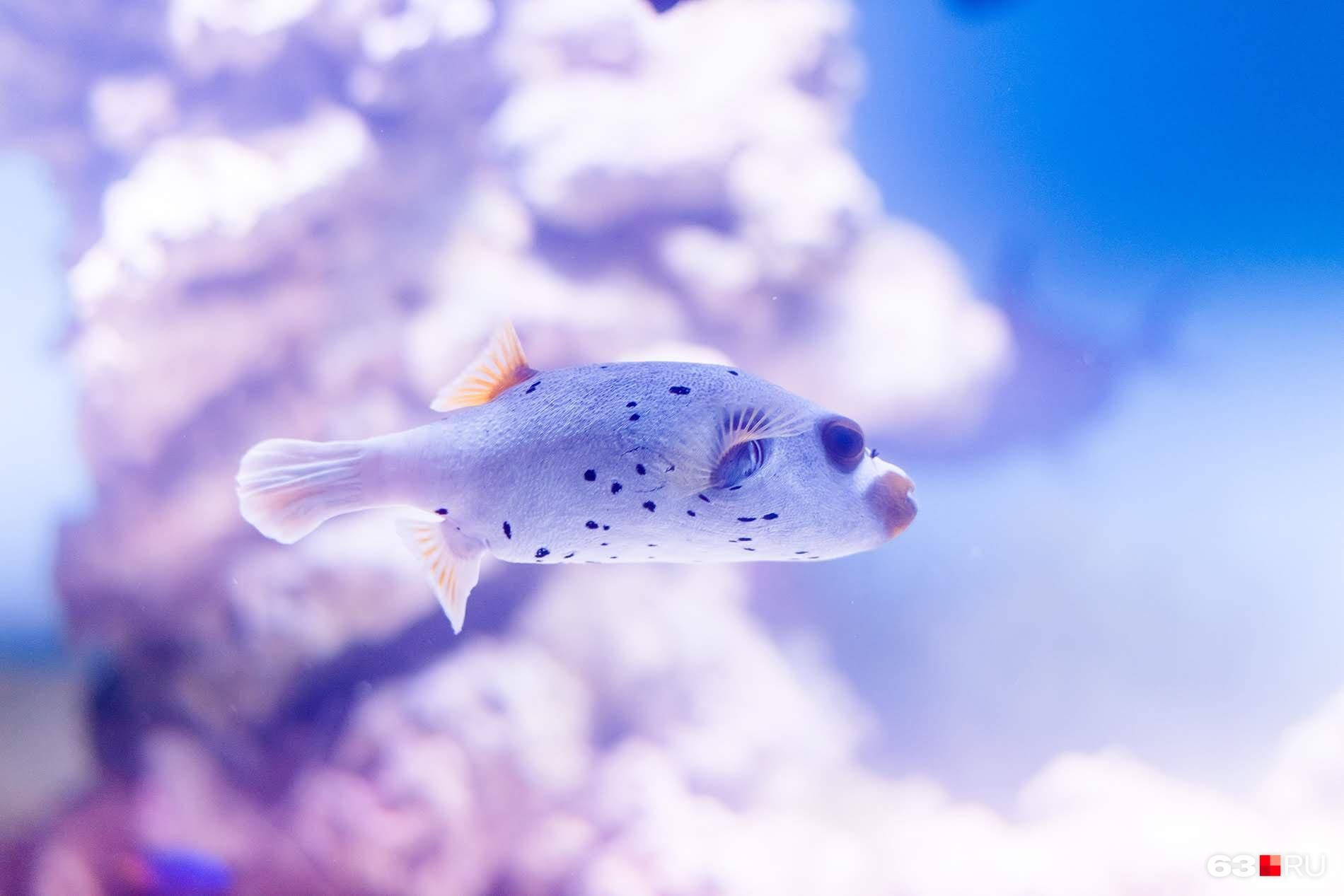 Всего в океанариуме живет 4000 различных рыб