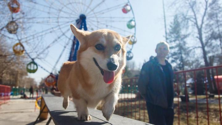 Волгоград уйдет на выходные с сильным ветром