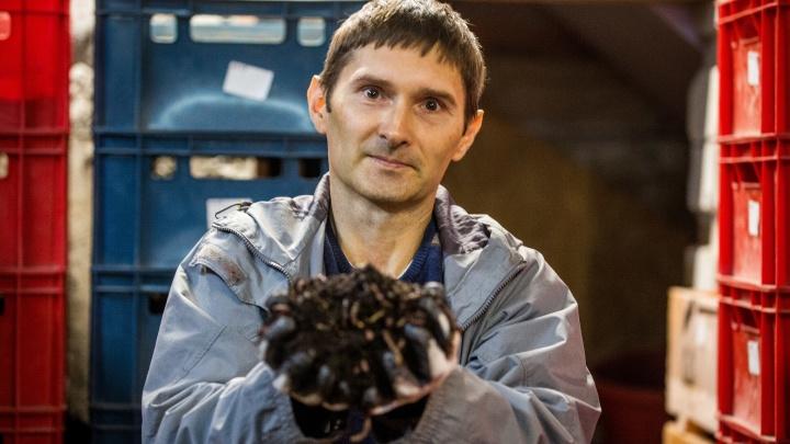 «Они не шумят, не болтают лишнего»: новосибирец устал от работы с людьми и открыл ферму с червяками