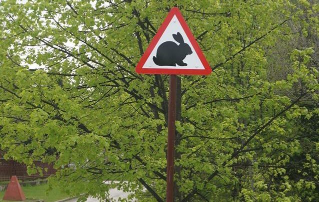 Осторожно, кролик: в Академгородке появился новый дорожный знак