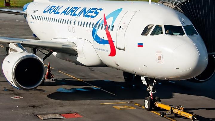 Врачи подсчитали количество алкоголя в крови у дебоширов, сорвавших рейс в Толмачёво