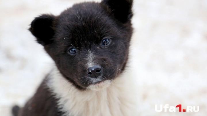 Уфимские волонтеры просят помочь бездомным животным