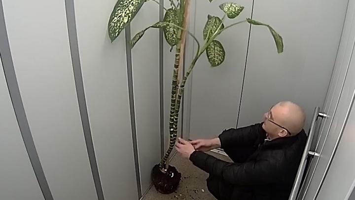 Мужчина сдиффенбахией удивил соседей в микрорайоне Бурнаковском