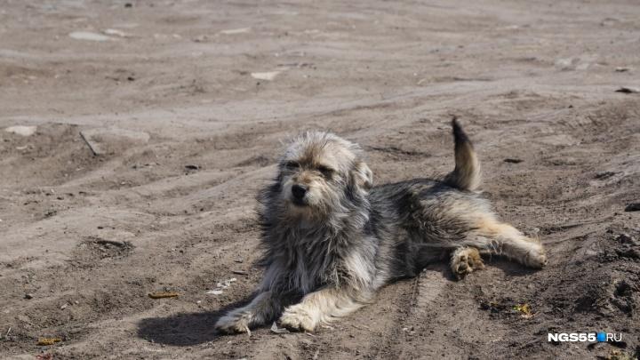 «Яндекс» открыл в Омске сервис для поиска пропавших домашних животных