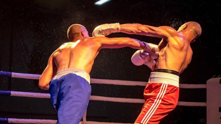 Куда сходить в выходные в Кургане: от бойцовского турнира до цирка в афише двух дней от 45.RU