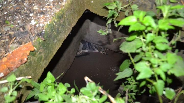 Уфимские спасатели вытащили из трёхметрового колодца собаку