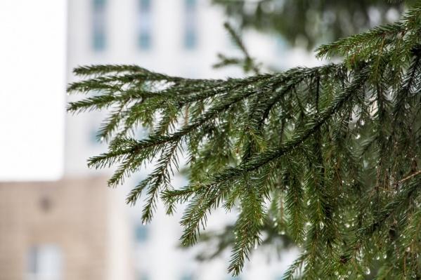 Для жителей Поморья в центральном офисе «Ростелекома» в Архангельске вновь зажгла свои огни новогодняя «Елка желаний»