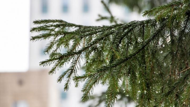 «Телеканал Деда Мороза» и «Елка желаний» от «Ростелекома» подарят северянам новогоднее настроение