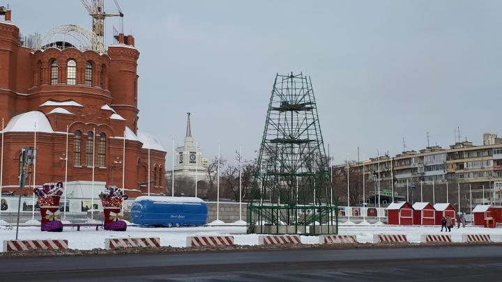 «Гоним кнутом»: в Волгограде нарядят главную елку города за неделю до Нового года