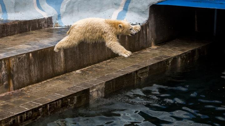 Бултых! 15 кадров, как медвежата-двойняшки из зоопарка встречают свою первую осень