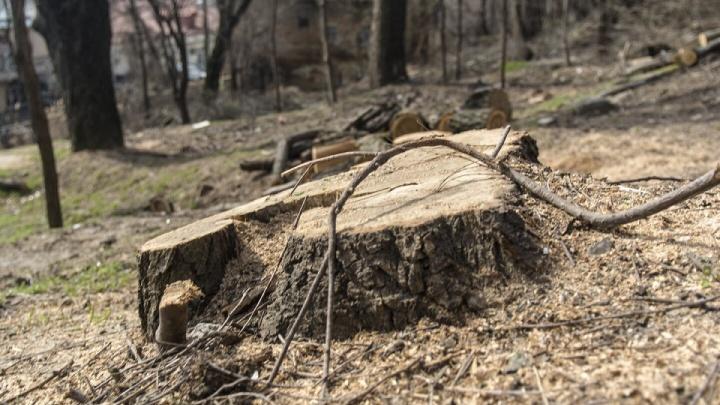 На Западном до 1 декабря пообещали убрать аварийно-опасные деревья