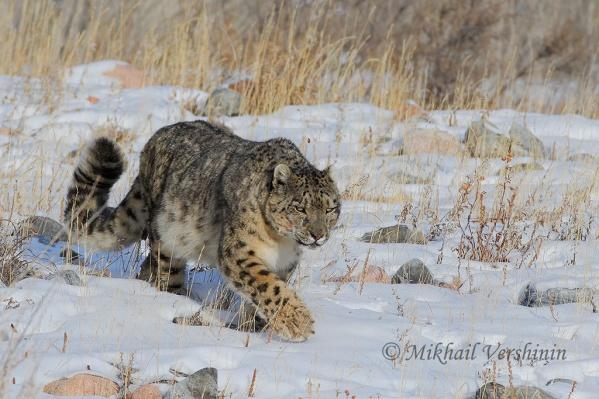 Снимок, сделанный Михаилом Вершининым в Монголии
