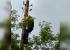 Екатеринбуржец освободил ворону, застрявшую головой в развилке фонарного столба