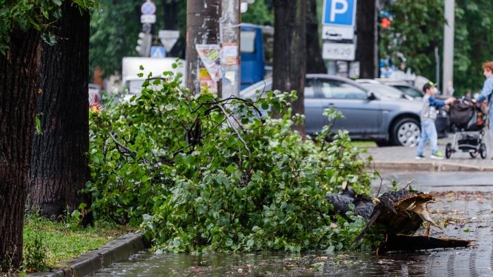 «Возможно падение деревьев»: в Прикамье МЧС продлило предупреждение об ураганном ветре
