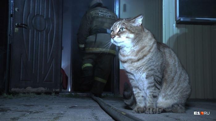 Из огня успели спасти кота