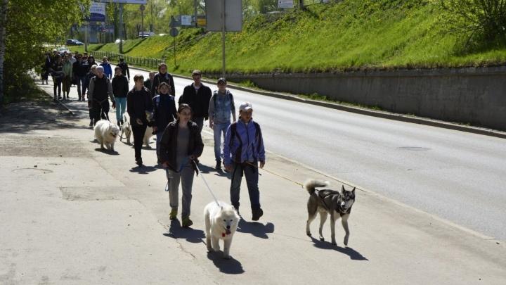 """Без гор и впадин: организаторы """"Майской прогулки"""" протестируют три маршрута"""