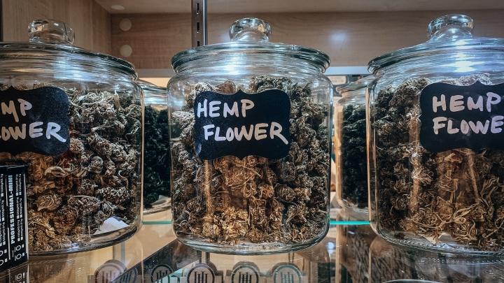 Госдума легализовала марихуану и мак: депутаты внесли изменения в самую «народную» статью