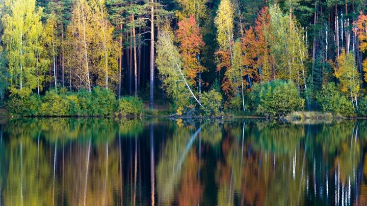 Золотые леса, коварная белка и кислотный рудник под Тагилом: выбираем лучшее фото сентября на Е1.RU
