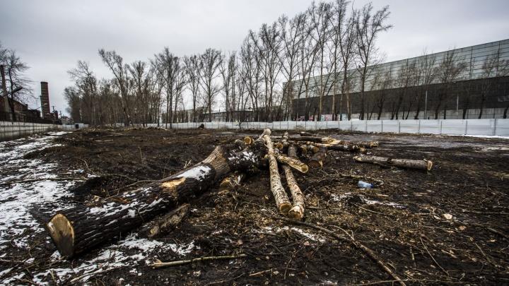 Вдоль улицы Сибиряков-Гвардейцев срубили деревья, чтобы построить СТО