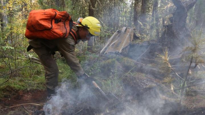 В Омской области запретили в лесах разжигать огонь из-за первых пожаров