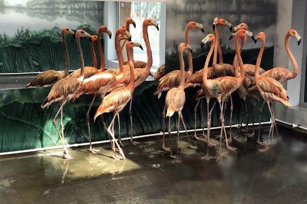 Интенсивность окраски птиц зависит от корма