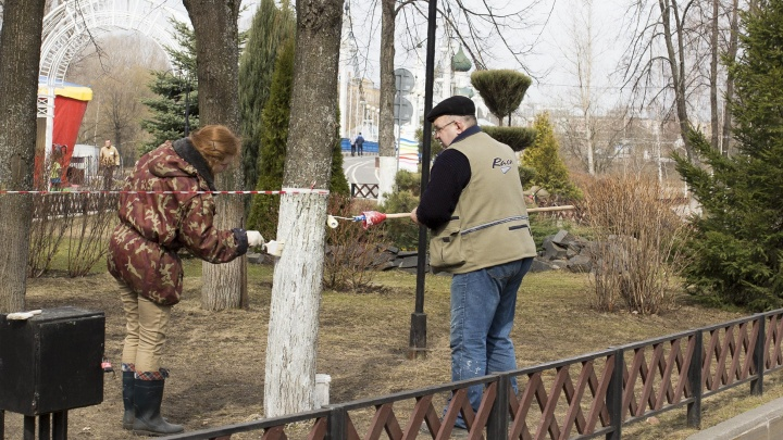 «Засело в умах чиновников»: в Ярославле деревья покрасят за бюджетные деньги. И это пустая трата
