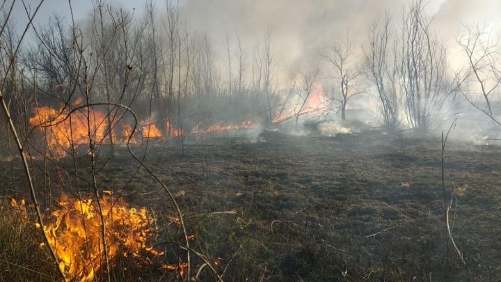 В районе Ростовского моря полыхает крупный ландшафтный пожар