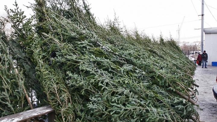 Вечнозелёная тема: коммерсант сдал чиновника, которому занёс взятку за рубку ёлок под Челябинском