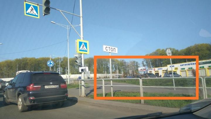 Осталось немного потерпеть: в Самаре пересадят многострадальные туи на Московском шоссе