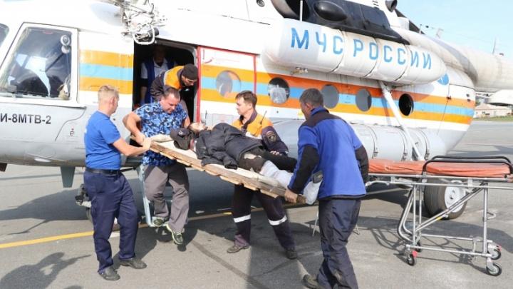 Собиравший кедровый орех красноярец упал с 18-метровой высоты: спасали с вертолётом
