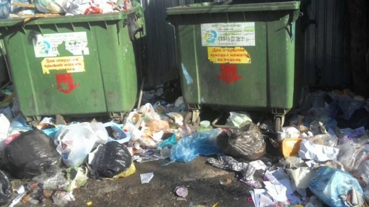 Горы мусора и крысы: с контейнерных площадок во дворах челябинцев перестали убирать мусор