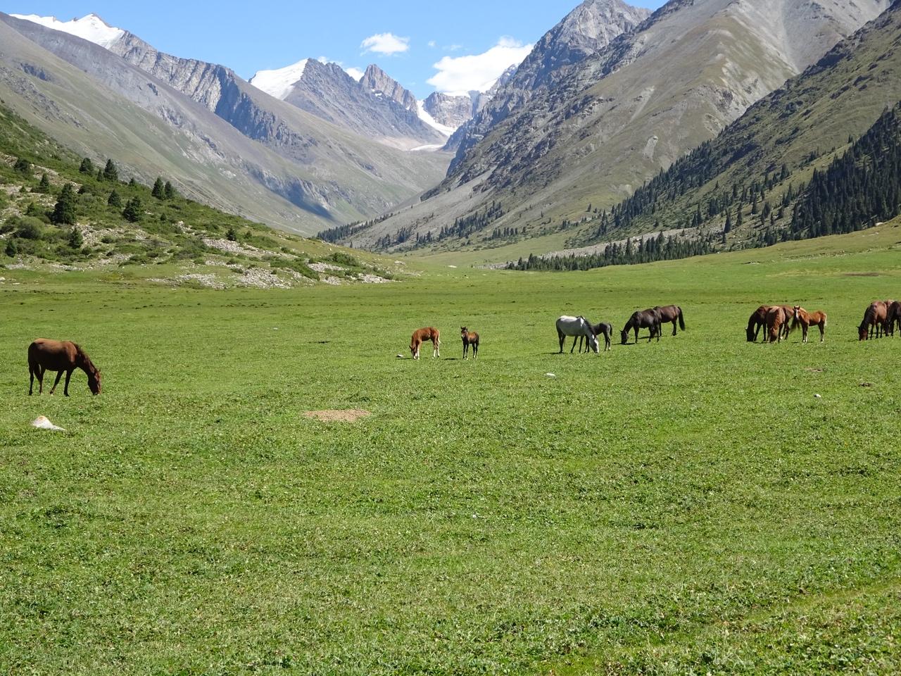 Долина Джууку-Чак. Здесь часто можно встретить пасущиеся табуны лошадей