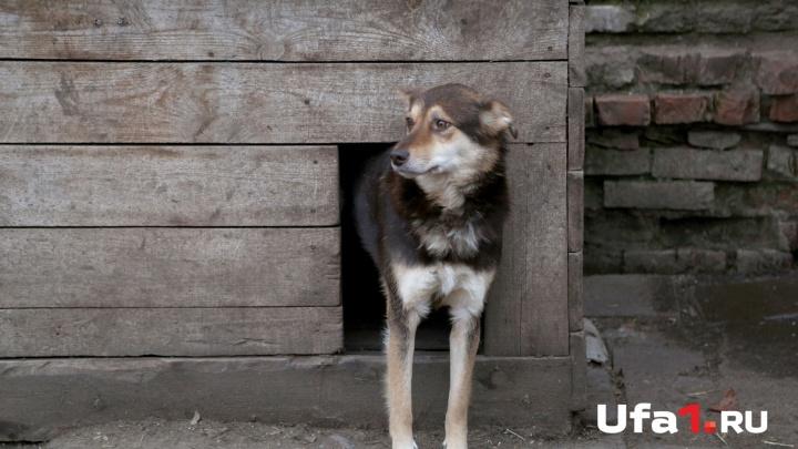 Новый очаг бешенства: в деревне Кушнаренковского района Башкирии объявили карантин